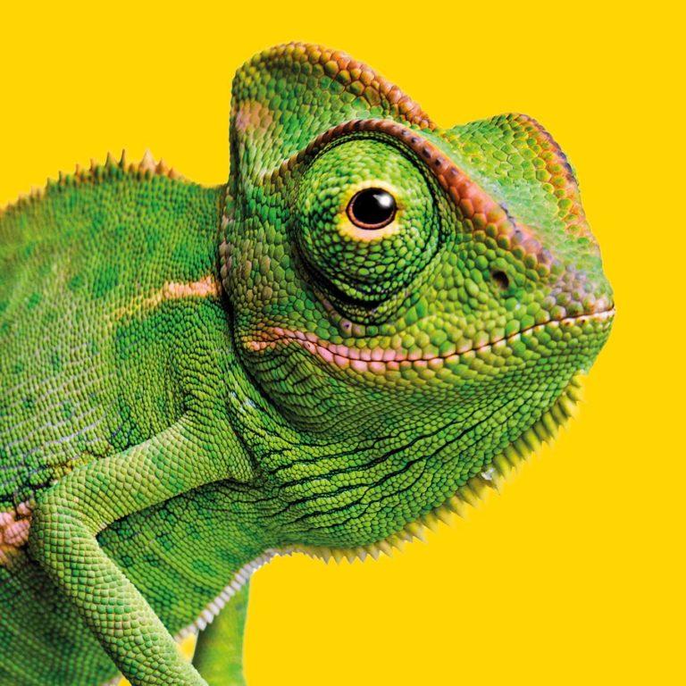 Mainline Chameleon